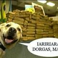 Esse é meu cachorro