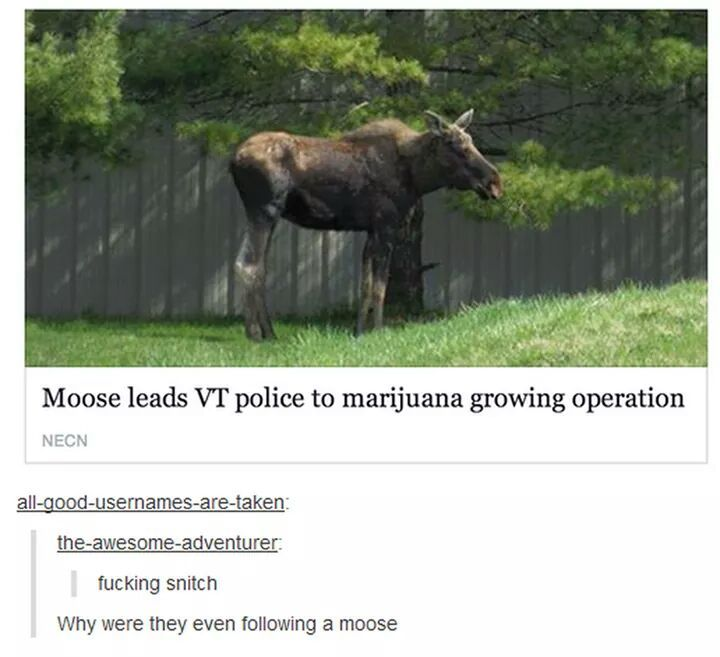 Good guy moose - meme
