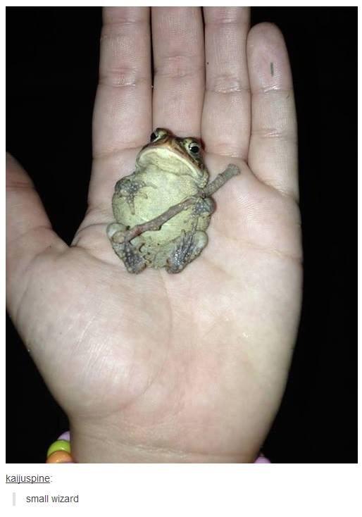 Toad wizard - meme
