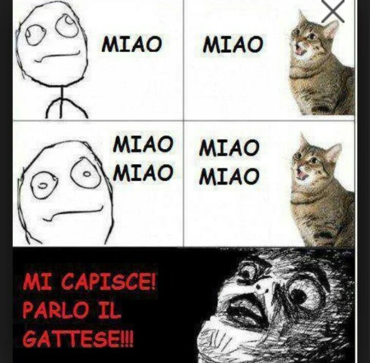 Gatti buggati - meme