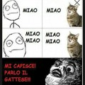 Gatti buggati