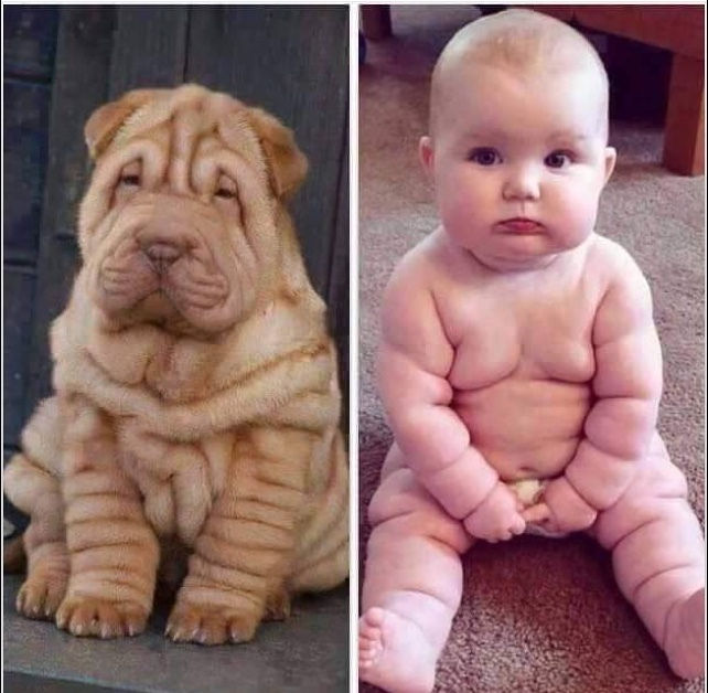 doggy and baby - meme