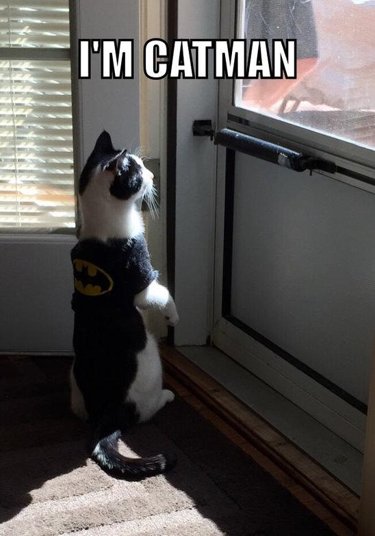 Je suis un chat - meme