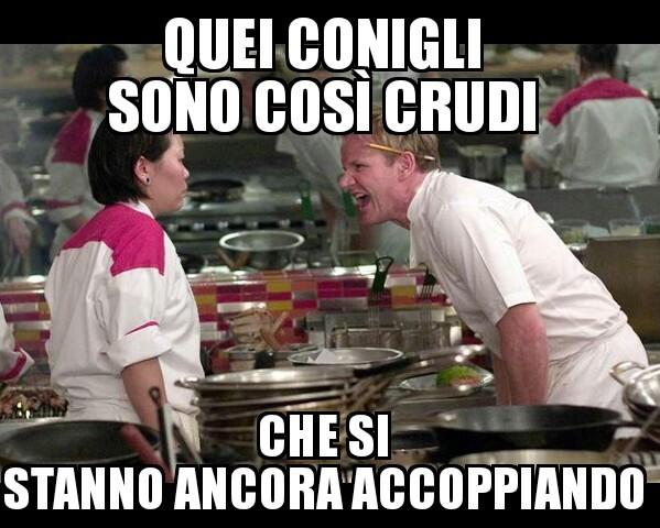 Conigli - meme