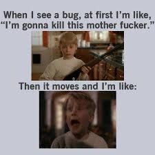 home alone with a bug - meme