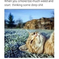 The cat knows what's up