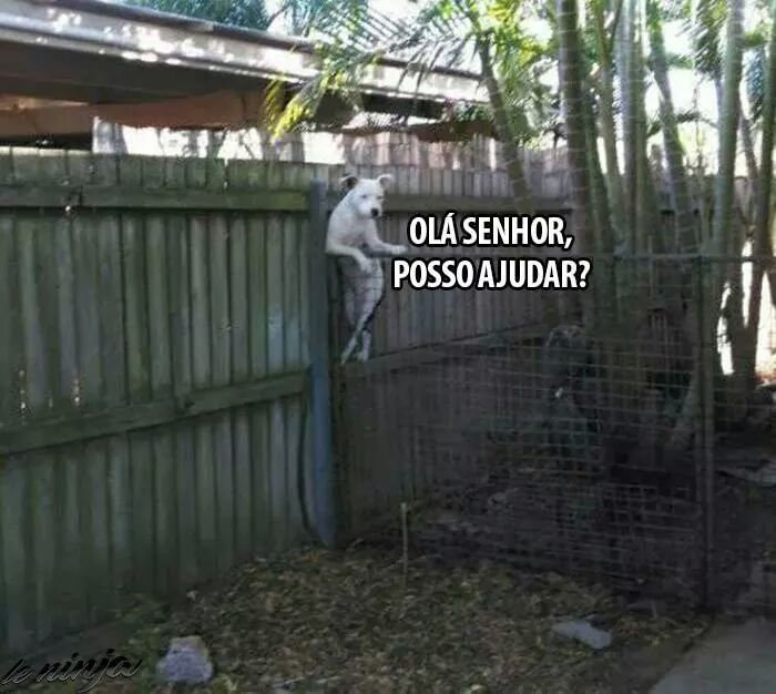 As pernas do cachorro kkk - meme