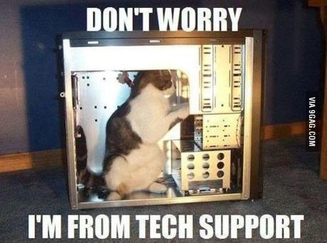 Cat support - meme