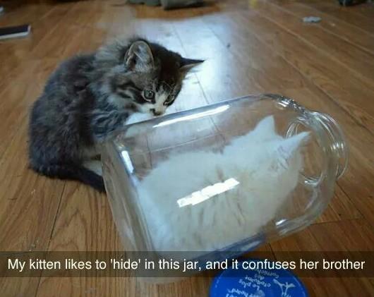 Cute kittis - meme