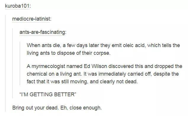 Ants - meme