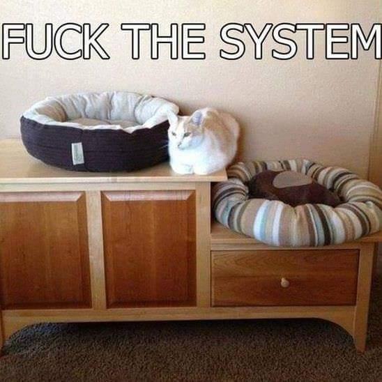 Ce chat. - meme