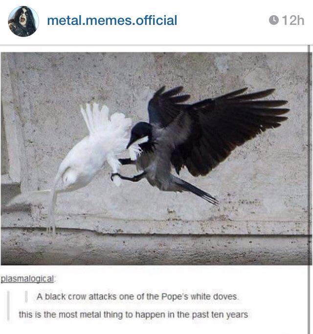 F**k the pope's dove - meme