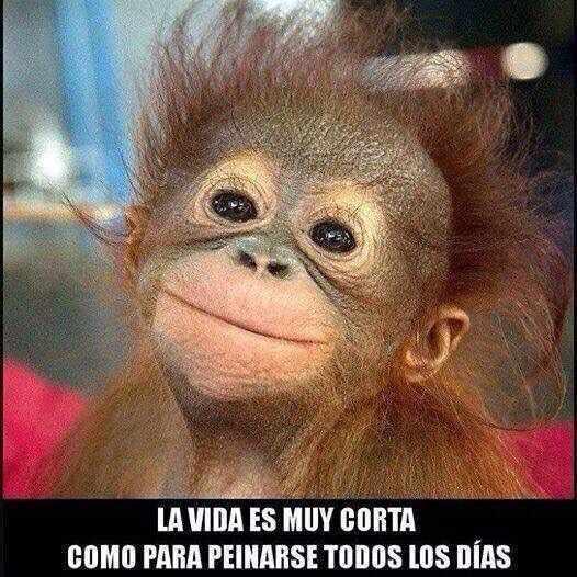 #NOTEPEINES - meme