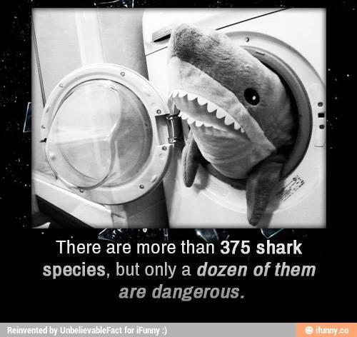 Sharks are nice. - meme
