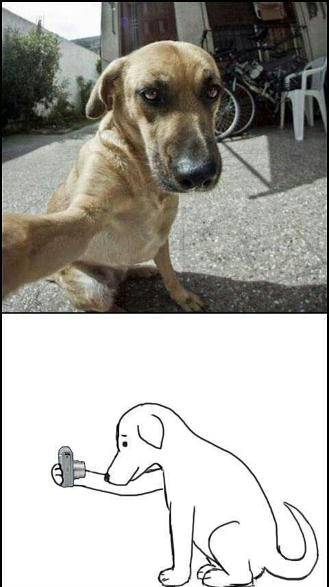Sup dawg - meme
