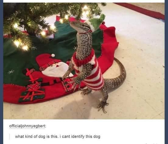 Its a dog - meme