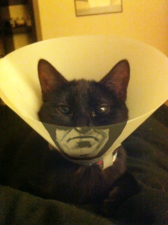 Catman - meme