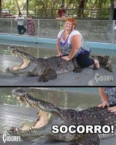 coitado do Aligator - meme