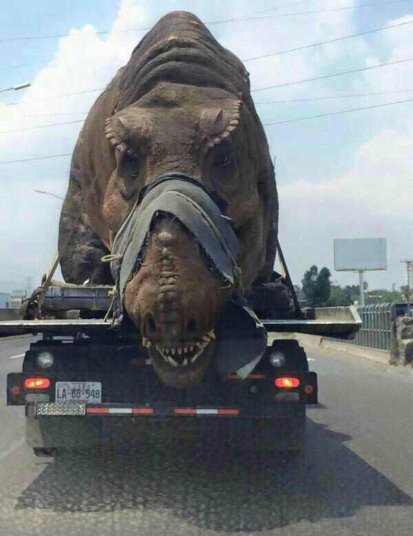 Pour le tournage de Jurassic World ? - meme