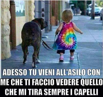 Dog bulls - meme