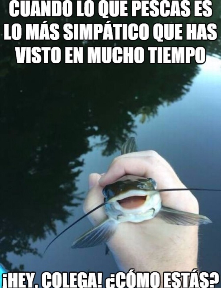 puto pez - meme