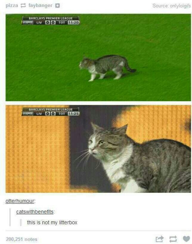 Confused cat is confused *ding* - meme
