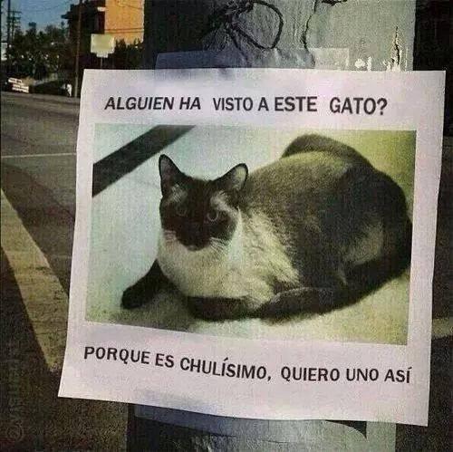 Gato perdido - meme