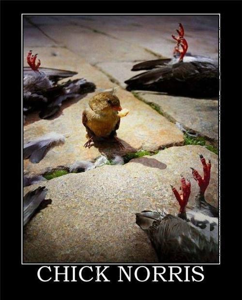 Chick powa - meme