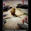 Chick powa