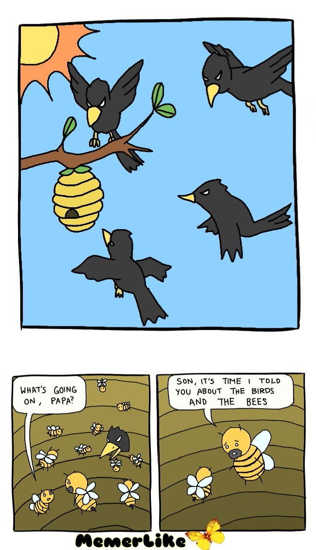 Birds and the bees. - meme