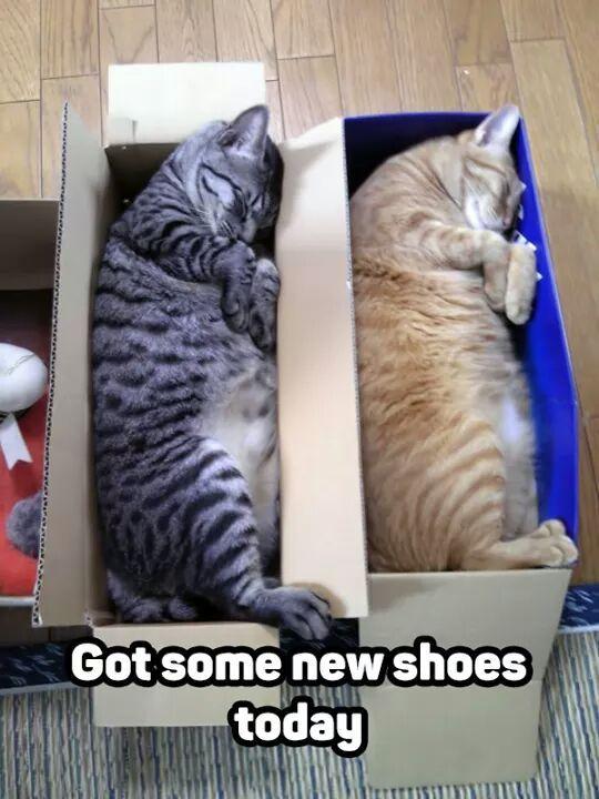 My new purrrrrrr of shoes - meme