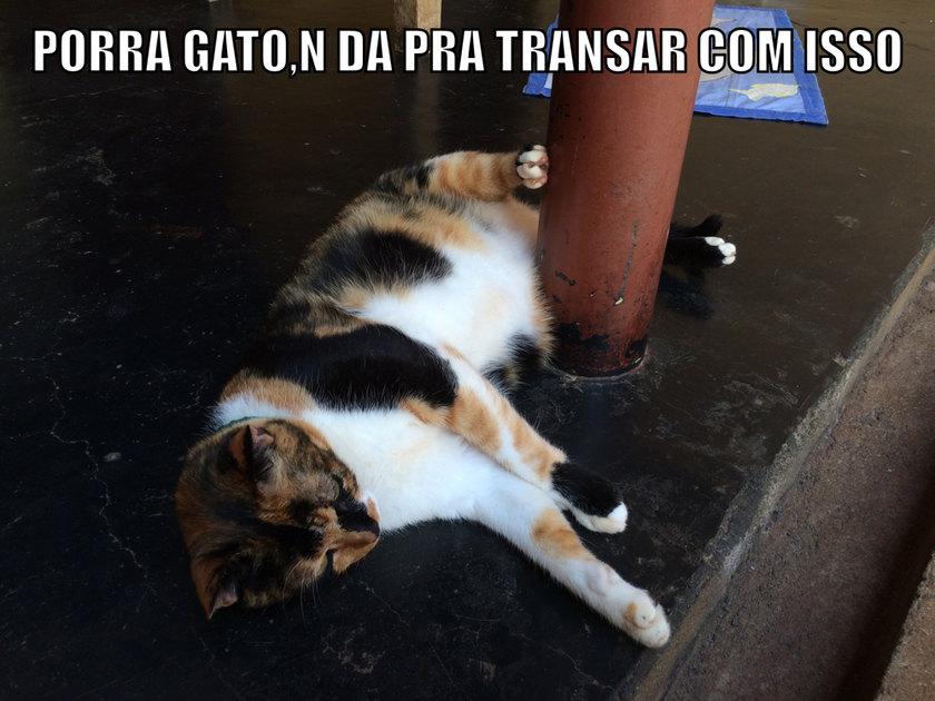 Porra gato - meme