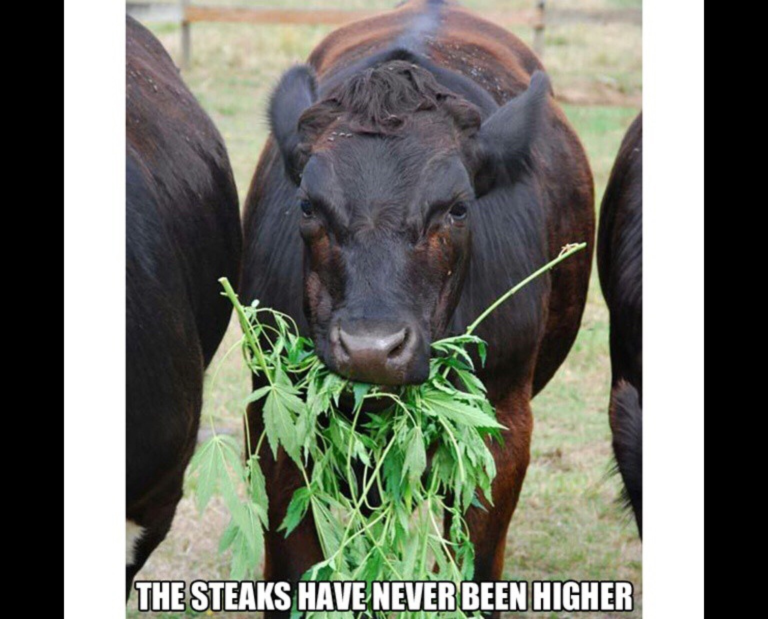 The steaks are higher - meme