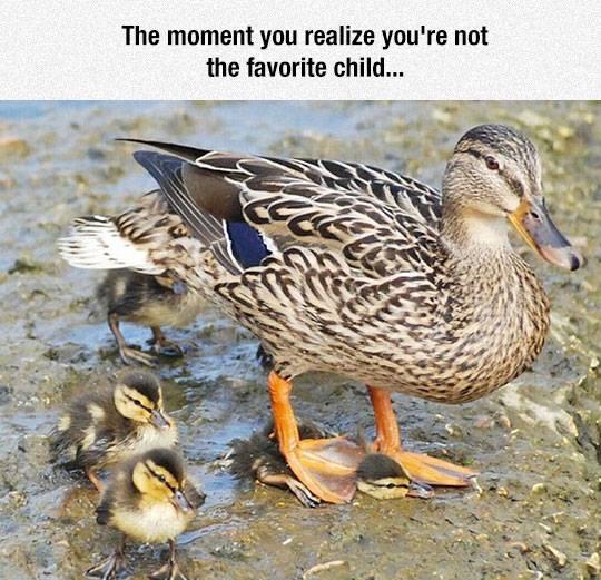 Oh duck... - meme