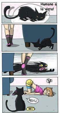 Estupido gato -.- - meme