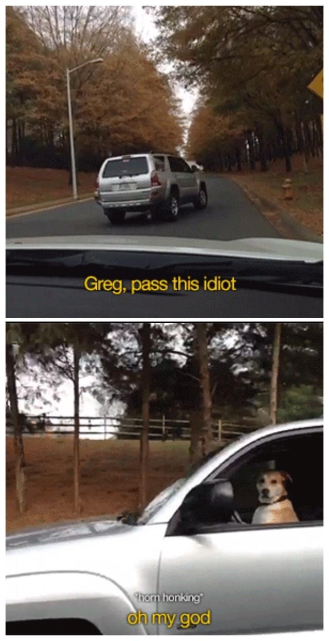 Who here is named Greg? - meme