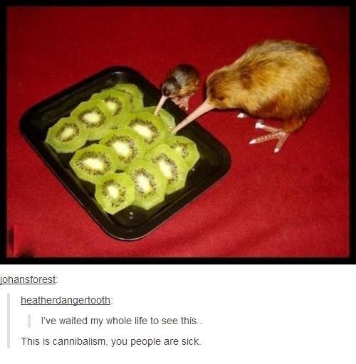 kiwi eats kiwi - meme