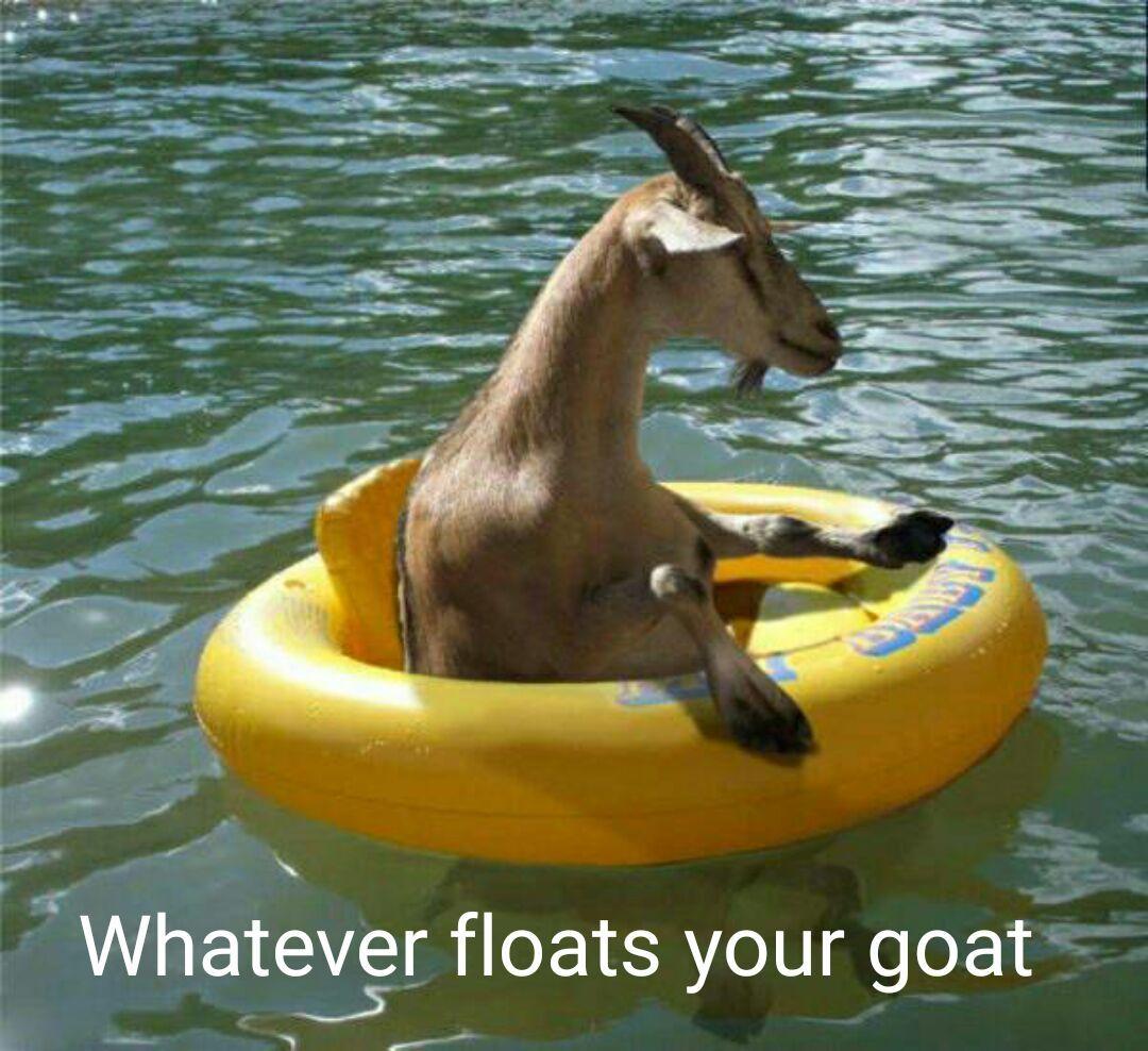 Goat goat on the boat boat - meme