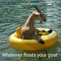 Goat goat on the boat boat