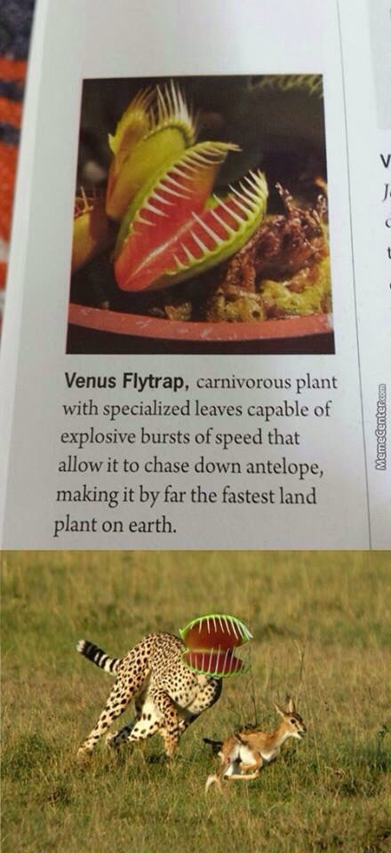 The venus flytrap is deadly - meme