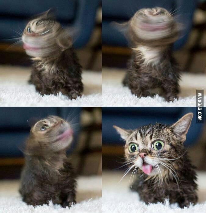 Crazy cat - meme