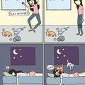 les chats vivent la nuit