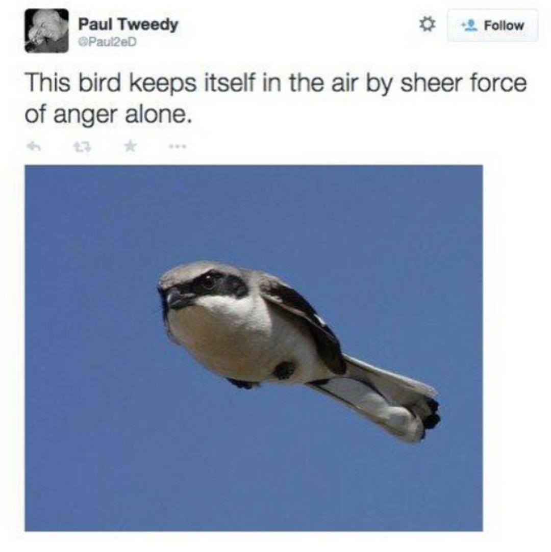 Magic bird - meme