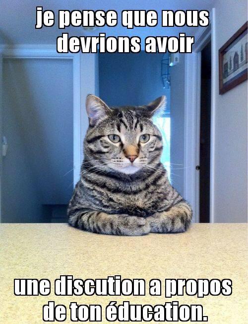 Quand t'a fait une bétise et que ton chat n'est pas content... - meme