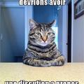 Quand t'a fait une bétise et que ton chat n'est pas content...