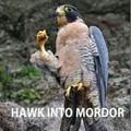 Hawk into mordor