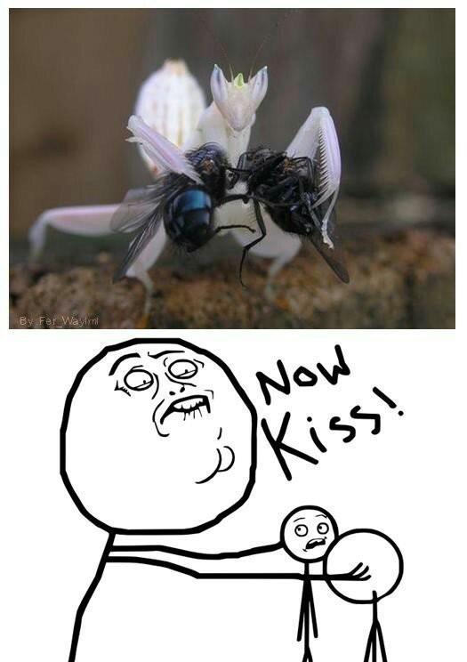 Now kiss - meme
