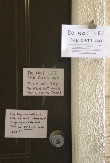 friggin cats - meme