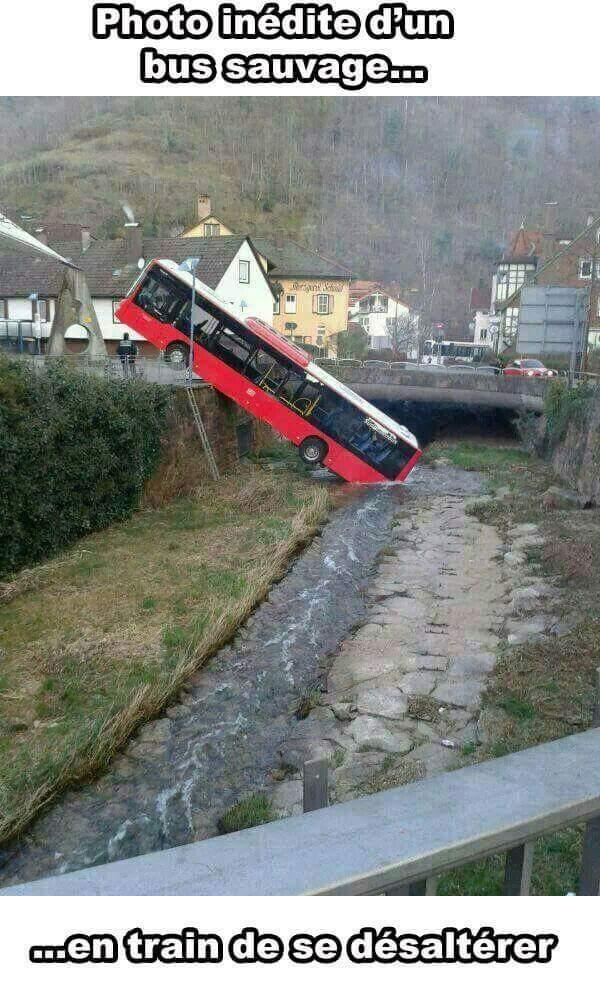 Un bus sauvage qui se désaltère - meme