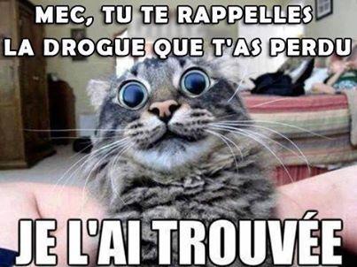 GHB Cat - meme